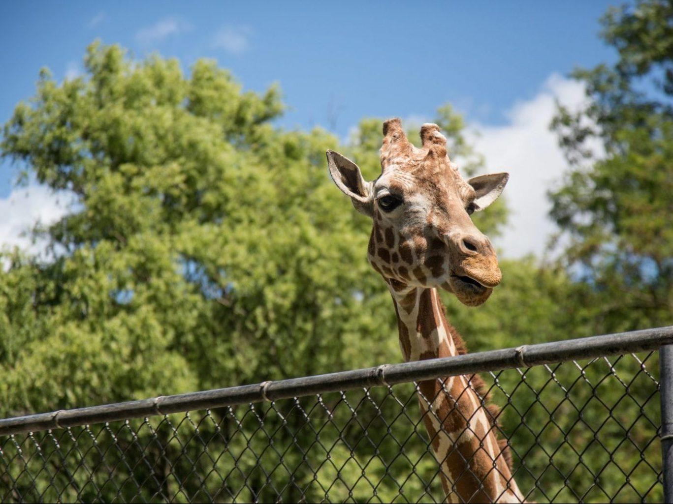 jardim-zoológico-gerador